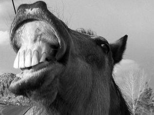 Gyümölcsöket ettek az első lovak